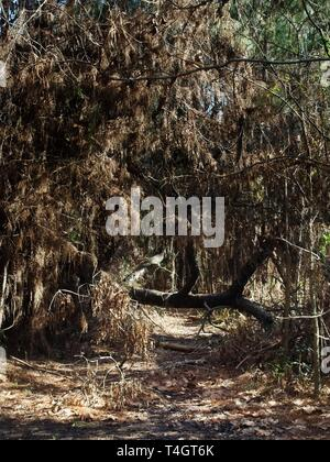 The Woodlands TX USA - 01/09/2019  -  Tree Fallen Over Trail in Woods - Stock Photo