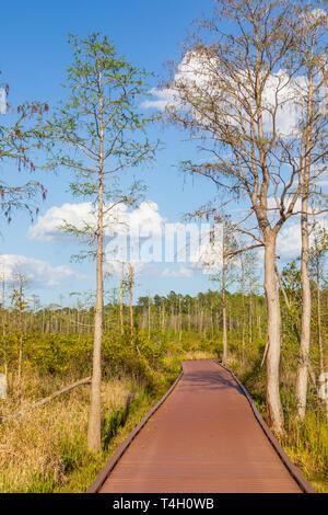 Okefenokee Swamp Folkston, GA, USA-3/30/19: A walkway through the eastern side of the Okefenokee swamp. - Stock Photo