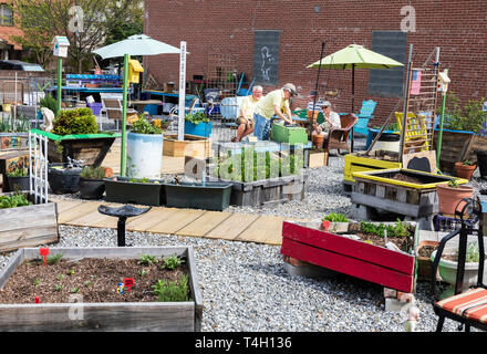 ASHEVILLE, NC, USA-4/11/19:  Four senior citizens plan and work on a community garden between Page Ave. and Haywood Street in downtown. - Stock Photo