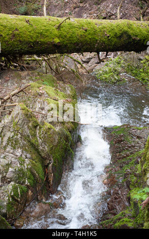 forest waterfalll, in early spring, Wutachschlucht Gorge, Black Forest, Germany - Stock Photo