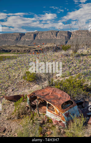 1940s car wreck abandoned in Chihuahuan Desert, bluebonnets, River Road, Sierra Ponce mesa in Mexico in dist, Big Bend National Park, Texas, USA