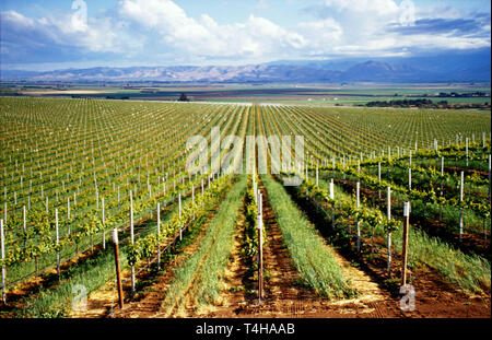 California, Californian, The West, Western, 'Golden State', Central CA, Pacific, Monterey, County Soledad vineyard view from Highway 146 Salinas Valle - Stock Photo