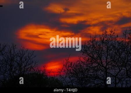 Abendrot, Sonnenuntergang mit Silhouette von Bäumen - Stock Photo