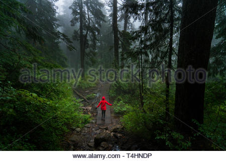 person walking in woods - Stock Photo