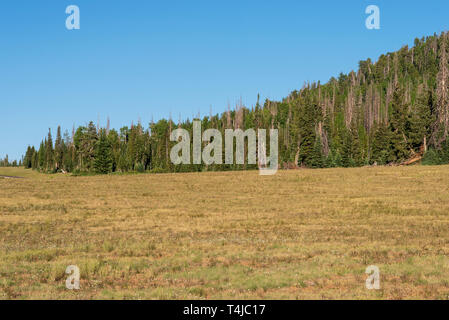 Green grassy fields with green forested hill under bright blue sky. - Stock Photo