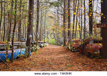 many cars parked in woods - Stock Photo