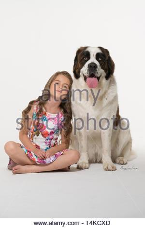 girl sitting beside adult white and red Saint Bernard - Stock Photo