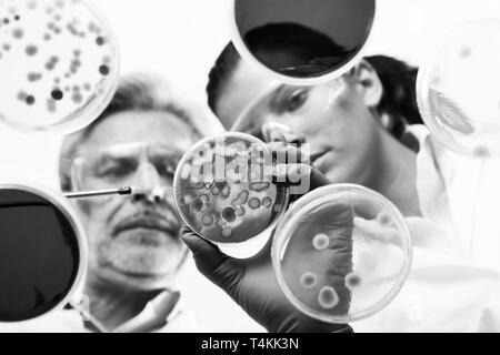 Life scientists researching in the health care laboratory. - Stock Photo