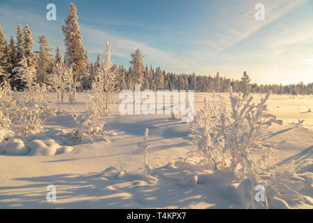 Landscape in winter season, nice warm afternoon light with clear blue sky, Gällivare county, Swedish Lapland, Sweden - Stock Photo