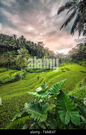 Tegallalang rice terrace in Ubud, Bali, Indonesia - Stock Photo