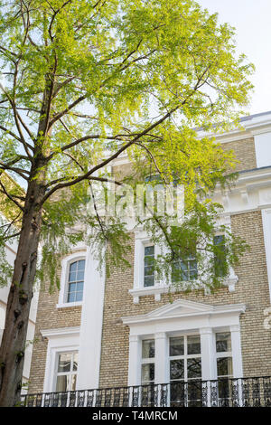 Onslow square house and tree in spring. Kensington Gate, South Kensington, London. UK - Stock Photo