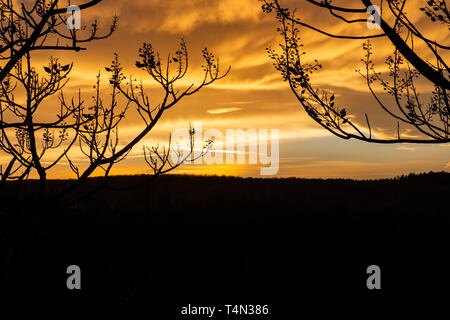 Beautiful sunset behind winter Paulownia tree branches in Krum, Southern Bulgaria - Stock Photo