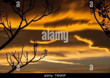 Beautiful sunset behind winter Paulownia tree branches in Krum, Southern Bulgaria - Stock Photo