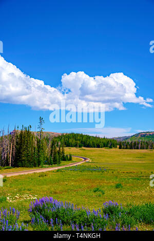 Springtime purple flowers, lush green fields and forest beyond under blue sky with white fluffy clouds. A country road passes through the vgreen valle. - Stock Photo
