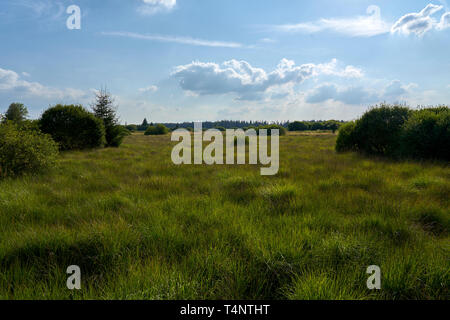 Hochmoor Hohes Venn - Stock Photo