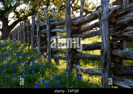 Old Wooden Fence and Bluebonnets on Willow City Loop Road, Texas - Stock Photo