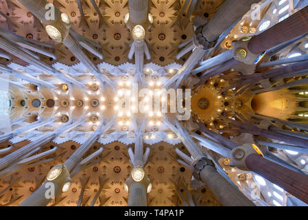 The ceiling of interior of Sagrada Familia (Church of the Holy Family), the cathedral designed by Gaudi in Barcelona, Spain