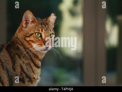 Adorable Cat Pictures