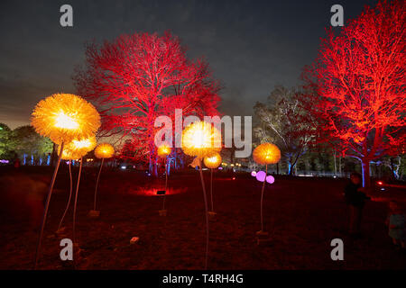 St.Goarshausen, Germany. 18th Apr, 2019. The trees of the newly designed Loreley plateau shine in the light of the light art festival 'Rheinleuchten'. The redesign began in September 2016. The federal government, the state and the Loreley municipality have provisionally provided around 15.5 million euros for the redesign and renovation of the leased concert stage. Credit: Thomas Frey/dpa/Alamy Live News - Stock Photo