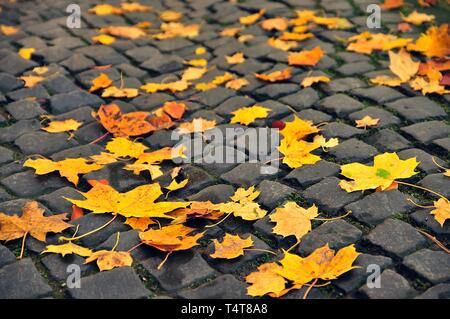 Autumn leaves on the floor, maple leaves (Acer spec.), Autumnal leaf fall, leaves in autumn colors - Stock Photo