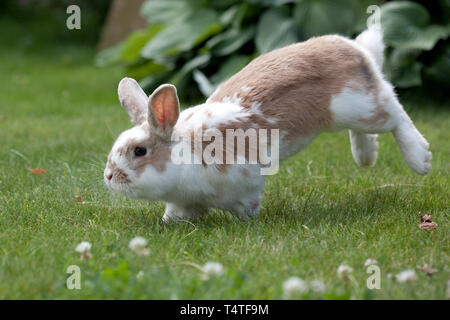 Rabbit jumping in a green meadow - Stock Photo