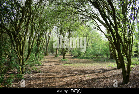 Forest landscape with many trees and shadows on the ground. - Stock Photo