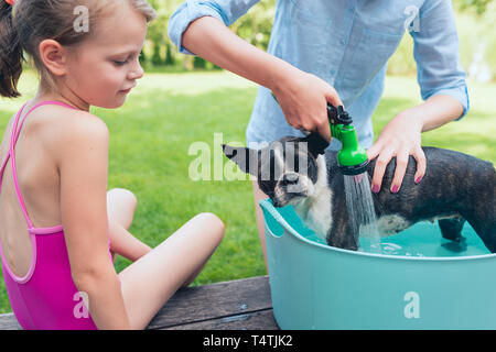 kids wash boston terrier puppy in blue basin  in summer garden on a wooden terrace - Stock Photo
