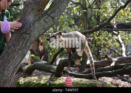 Easter Treats at ZSL London Zoo 18/4/2019 - Stock Photo
