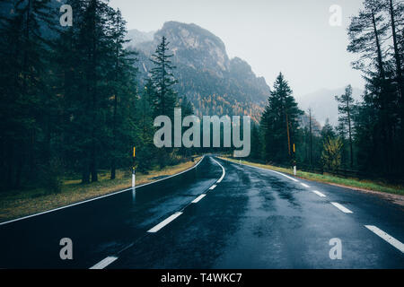 Road in the spring forest in rain. Perfect asphalt mountain road in overcast rainy day. Roadway with reflection and pine trees. Vintage style.  Transp - Stock Photo