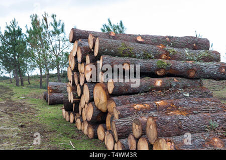 trunks of trees stacked in the woods - Stock Photo