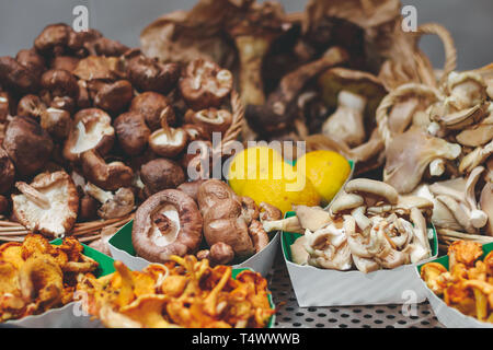 Various fresh mushrooms on a showcase in a product shop. - Stock Photo