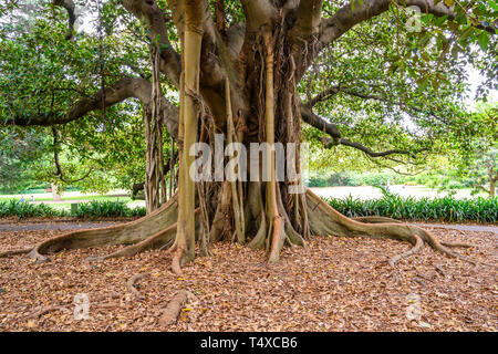 The Royal Botanic Garden covers 74 acres at Farm Cove, adjacent to the central business district of Sydney, New South Wales, Australia. - Stock Photo