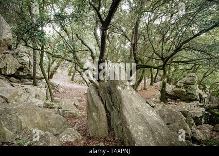 Forest of oaks and karst rock, Es Pixarells, escorca, natural site of the Sierra de Tramuntana, Mallorca, Balearic Islands, Spain. - Stock Photo