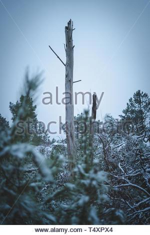 broken wood in forest - Stock Photo