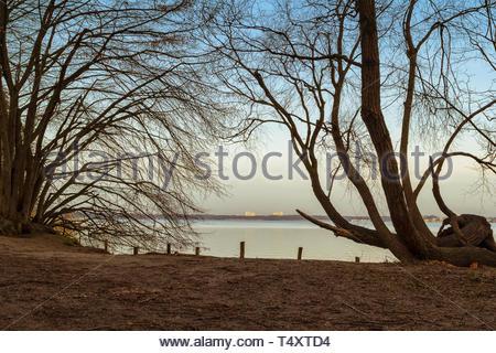 sea beyond bent branches - Stock Photo