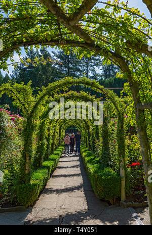 Canada, Brentwood Bay, Butchart Gardens, Rose Garden - Stock Photo