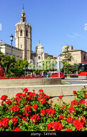 Flowers on Plaza de la Reina Valencia Square in Old Town Spain, Cathedral Tower in the background - Stock Photo