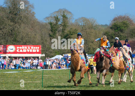 Hungerford, West Berkshire, UK. 19th Apr 2019. Melbourne 10 Racing Camel Racing in the main area thrilling the crowds with AP McCoy (Sir Anthony Peter McCoy OBE, commonly known as AP McCoy ) former champion horse racing jockey taking the the lead and onto win the race over famous horse race trainer Jamie Osborne and Nico de Boinville racing jockey who competes in National Hunt racing. - Stock Photo