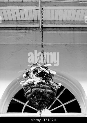 New Orleans LA USA - 05/09/2018  -  Hanging Green Plant in the French Quarter in B&W - Stock Photo
