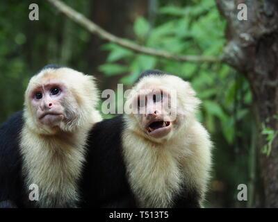Wildlife in Costa Rica - Stock Photo