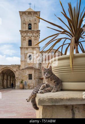 Cat sitting in the yard of St Lazarus byzantine church in Larnaca, Cyprus stares at the camera - Stock Photo