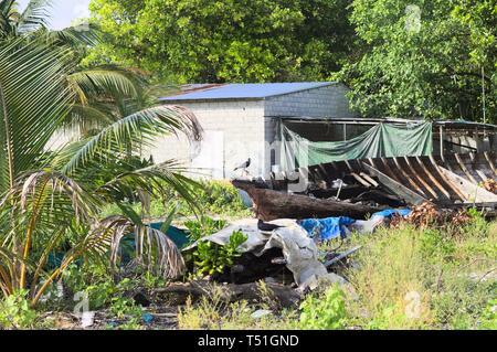 A black crow on an abandoned wooden boat (Ari Atoll, Maldives) - Stock Photo