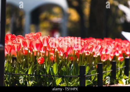 Flowers at the Peace memorial center in Hiroshima, Japan - Stock Photo