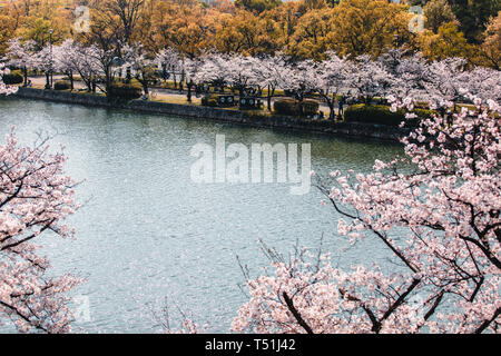 Hiroshima Castle covered in cherry blossoms and flowers - Stock Photo