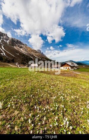 Malga Gampen during spring, Puez Odle, Dolomites, Funes, Bolzano province, South Tyrol, Italy - Stock Photo