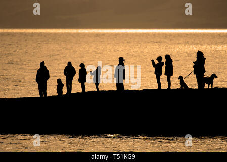 Looking for dolphins, Chanonry Point, Rosemarkie, Scotland. - Stock Photo