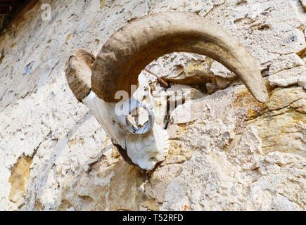 Schädel, skelett einer Ziege, mit großen, gebogenen Hörner, hängt an einer Mauer - Stock Photo