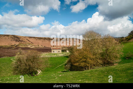 Derelict farmhouse deep in Hole of Horcum surrounded by farmland, trees, heather, and rolling landscape in spring near Goathland, Yorkshire, UK. - Stock Photo