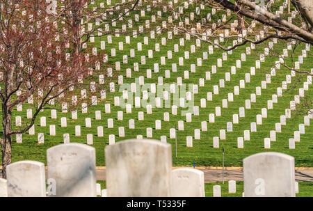 Washington DC / United States - April 03 2019: Headstones at Arlington National cemetery - Stock Photo