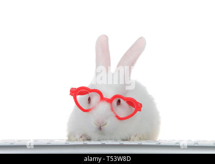 Portrait of an adorable white albino baby bunny rabbit wearing heart shaped pink glasses, paws on computer keyboard looking directly at viewer as if l - Stock Photo